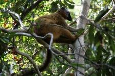 Tsingy De Bemaraha Wildlife