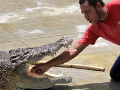 Tuaran Crocodile Farm - Crocodile