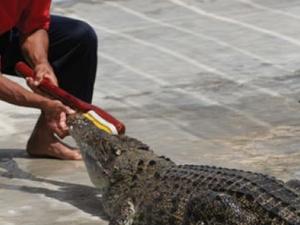 Tuaran Crocodile Farm