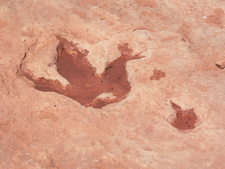 Tuba City Dinosaur Track
