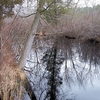 Tuckahoe River