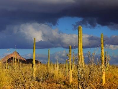 Tucson AZ Saguaro NP