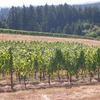 Tuenge Vineyard OR