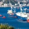 Tugs & Ships In Wellington Harbour NZ