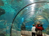 Shark Tunnel At The Aquarium Barcelona