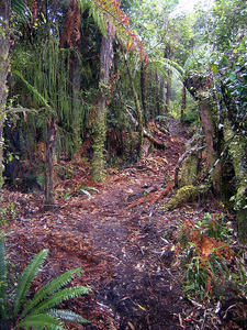 Tupapakurua Falls Path