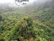 Tupapakurua Falls Track - Tongariro National Park - New Zealand