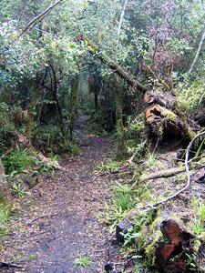 Tupapakurua Falls Trail Views