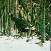 Turkey Bluffs State Fish And Wildlife Area