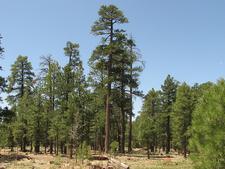 Turkey Trail 217 - Tonto National Forest - Arizona - USA