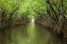 Turner River Through Everglades Mangroves FL