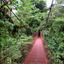 Typical  Monteverde Bridge