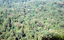 Tall Sub Tropical Rainforest