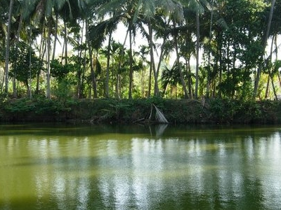Temple Pond Kerala
