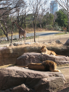 Savannah Zone, Tennoji Zoo