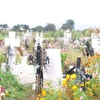Flower Covered Cemetery