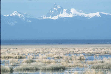 Thielsen Klamath Marsh