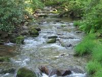 Tiadaghton State Forest