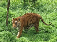 Sathyamangalam Wildlife Sanctuary