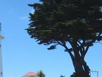 Tiritiri Matangi Lighthouse