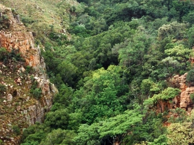 Tonquani Kloof In The Magaliesberg