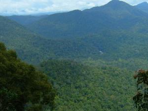 Endau Rompin Parque Nacional