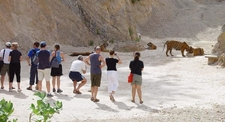 Tourists Observing Tigers