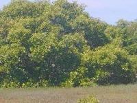 Towra Ponto Reserva Natural