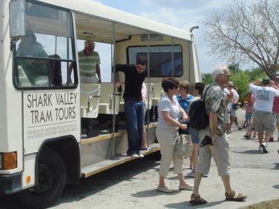 Shark Valley Tram