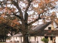Tranby House