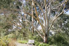 Trees At The National Botanic Gardens