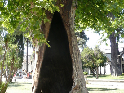 One Of The Hollow Trees