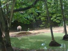 Rhino Enclave