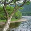 Trossachs Loch