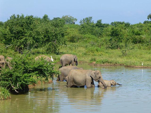 Eco & Adventure Holiday - Sri Lanka Photos