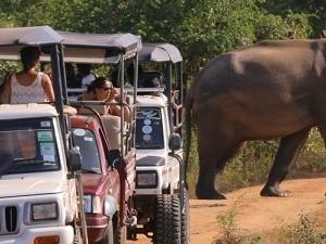 Udawalawe National Park Jeep Safari - Half Day Safari Fotos