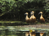 Udhayamarthadapuram Birds Sanctuary