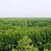 U Minh Floresta