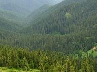 Umpqua Floresta Nacional