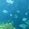 Underwater @ Poor Knights Dive Site NZ