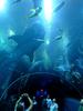 Underwater World, Singapore