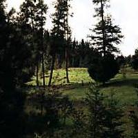 Unity Forest State Scenic Corridor