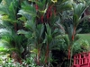University Of  Puerto  Rico  Botanical  Gardens