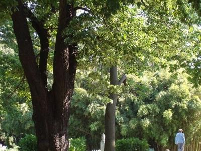 The Botanical Garden Of The University Of Vienna