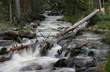 Upper Lehman Creek - Great Basin National Park