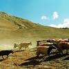 Upper Mustang Landscape - Annapurna Nepal