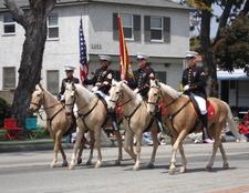 U S M C Horses