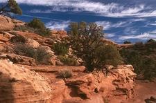 UT Canyonlands NP Landscape