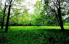 Uutela Green-Fields - Summer View - Helsinki Finland