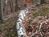 Uzsa Forest